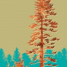 Douglas Fir Tree forest Print