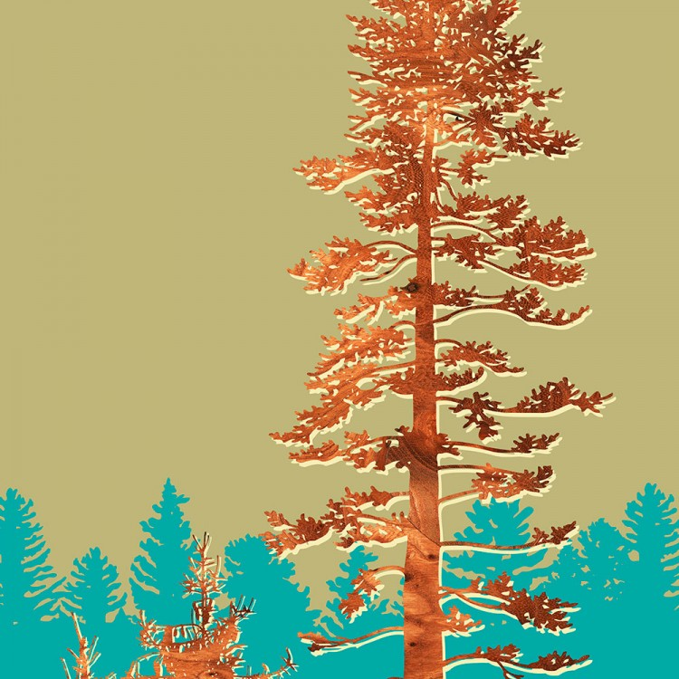 Douglas Fir Tree forest Print