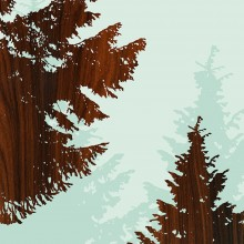 Norway Spruce Nothwest forest tree wall Art Print