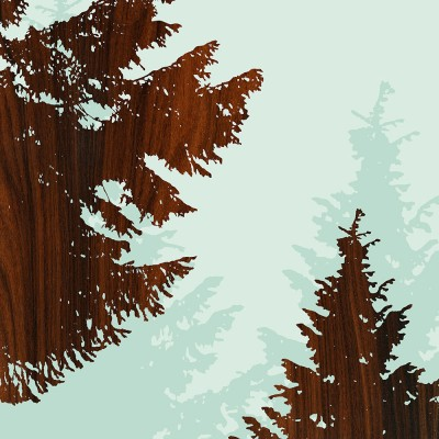 Norway Spruce Tree Forest Print