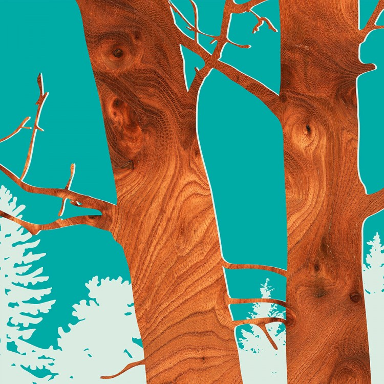 Red Alder Tree Forest Print