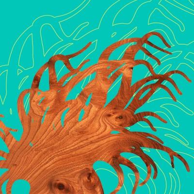 anemone marine animal Print