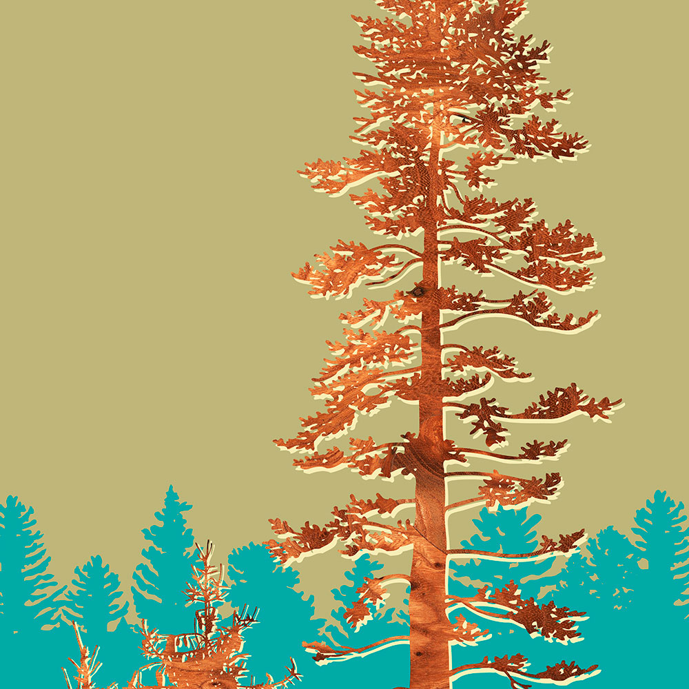 Douglas Fir Nothwest forest tree wall Art Print
