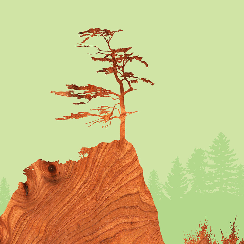 Sitka Spruce Nothwest forest tree wall Art Print