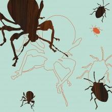 blue orange garden beetles insect animal print