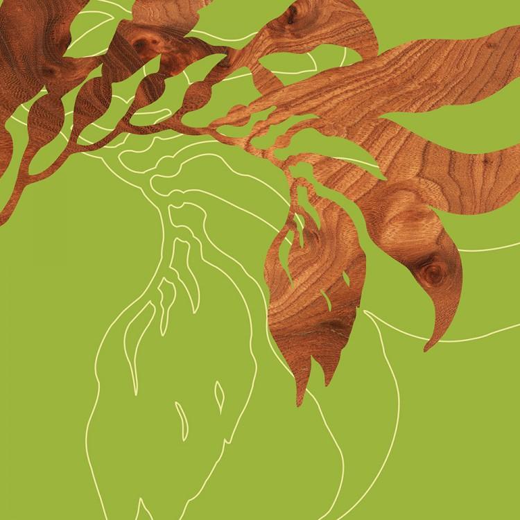 green sea kelp seaweed marine botanical Print